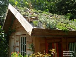 eco home green roofs