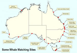 whale-watching-sites