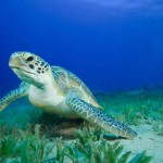 Birth Records marine turtle eggs in Kefalonia 2013