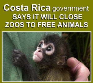 Costa Rica closes zoos releasing animals