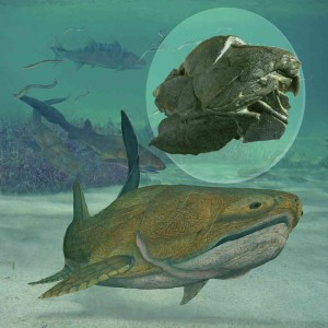 The oldest known animal to have face discovered